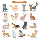 Cat breed set Stock Photography