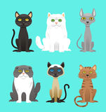 Cat breed set Royalty Free Stock Photography