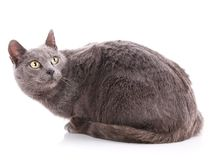 Cat without breed. A simple gray cat stock photo