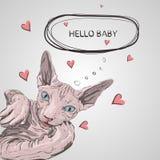 Cat breed Sphynx face sketch illustration vector illustration