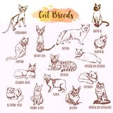 Cat breed and vet care icon set. Hand drawn cats types. Sketch of kitten. Maine coon, manx, siamese and othe breeds. Vector illustration. Pet collection Stock Images
