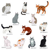 Cat breeds cartoon style vector set. Royalty Free Stock Photography
