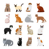 Cat breeds cute pet animal set Royalty Free Stock Photography