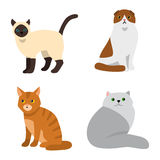 Cat breeds cute pet animal set Stock Image