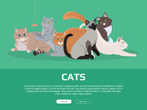 Cat Breeds Cute Pet Animal Set Vector Web Banner. Royalty Free Stock Images