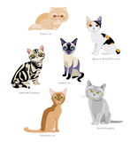 Cat breeds royalty free illustration