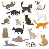 Cat Breeds Flat Icons Collection nacional Imagen de archivo libre de regalías