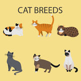 Cat Breeds, icônes de chat Photos stock