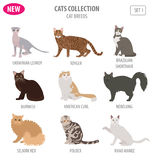 Cat breeds icon set flat style isolated on white. Create own inf Royalty Free Stock Images