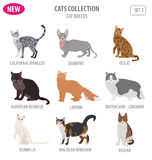 Cat breeds icon set flat style isolated on white. Create own inf Stock Photography
