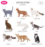 Cat breeds icon set flat style isolated on white. Create own inf Stock Photo