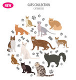 Cat breeds icon set flat style isolated on white. Create own inf Stock Image