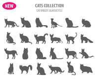 Cat breeds icon set flat style isolated on white. Create own inf Royalty Free Stock Image