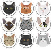 Cat breeds icon set flat style Royalty Free Stock Photos