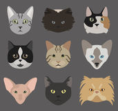 Cat breeds icon set flat style Royalty Free Stock Image