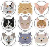 Cat breeds icon set flat style Royalty Free Stock Images