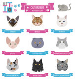 Cat breeds icon set flat style Royalty Free Stock Photography