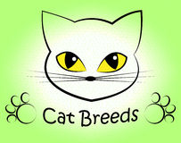 Cat Breeds Indicates Offspring Breeding And Bred. Cat Breeds Representing Felines Reproduce And Pet Royalty Free Stock Images