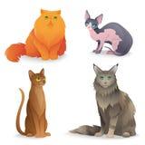 Cat Breeds set Stock Photography