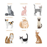 Cat breeds set. Stock Photography