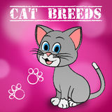 Cat Breeds Shows Bred Pets And Kitty. Cat Breeds Representing Pets Husbandry And Reproduce royalty free illustration