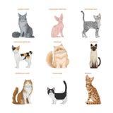 Cat Breeds uppsättning Arkivbild