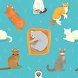 Cat breeds vector cute kitty pet cartoon cute sleep and play animal cattish character set catlike illustration seamless Stock Photo