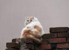 Cat. On a brick wall, crawls territory Royalty Free Stock Photo