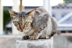 Cat on brick wall Stock Photo