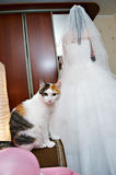 Cat and bride Stock Image