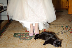 Cat and Bride Royalty Free Stock Photo