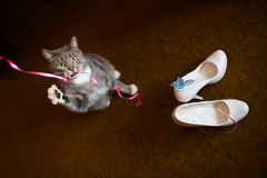 Cat and bride's shoes Stock Photo