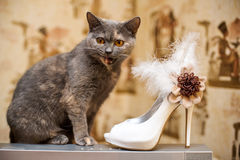 Cat and the bride shoes with feathers stock photo