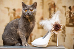 Cat and the bride shoes with feathers Stock Photos