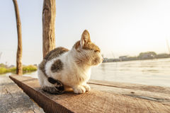 Cat on bridge Stock Image