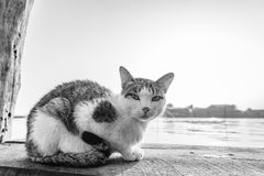 Cat on bridge Stock Photography