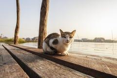 Cat on bridge Royalty Free Stock Image