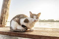 Cat on bridge Stock Photos