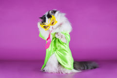 Cat in bright clothes and glasses Royalty Free Stock Photo