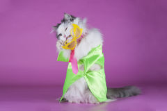 Cat in bright clothes and glasses Stock Photos