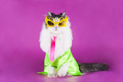 Cat in bright clothes and glasses Royalty Free Stock Image
