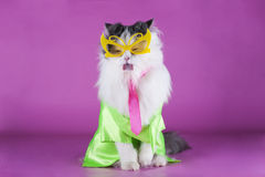 Cat in bright clothes and glasses Royalty Free Stock Photography