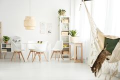 Cat in bright dining room. Cat on hammock and plants in bright dining room interior with rattan lamp above table and white chairs Royalty Free Stock Images