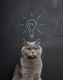 Cat with a bright idea. Chalk drawing of a light bulb above a grey cat royalty free stock images