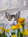 Cat with bright yellow eyes Stock Photos