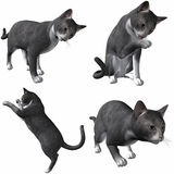 Cat-British Short Hair Royalty Free Stock Photos