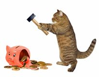 Cat with piggy bank royalty free stock photo