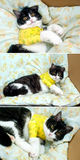 Cat with broken paw in cast Royalty Free Stock Photos