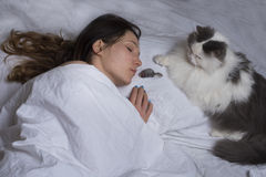 Cat brought prey to his mistress Stock Photo