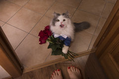 Cat brought roses as a gift to his mom Royalty Free Stock Photography